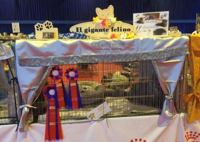 Cat Show Locarno (CH) 17/18 settembre 2016 (FIFE)