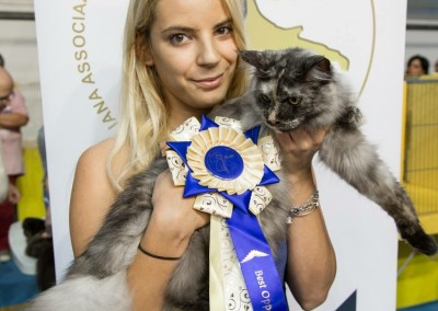Cat Show Agrate Brianza (IT) 24/25 settembre 2016 (WCF)