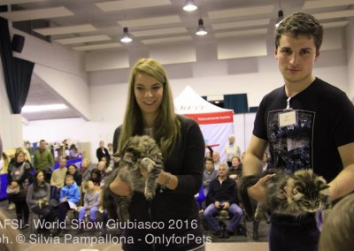 World Cat Show Giubiasco (CH) 19/20 novembre 2016 (WCF)