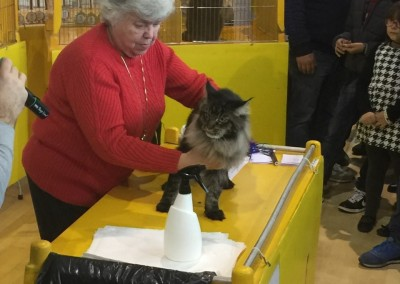 Cat Show Voghera (IT) 3 novembre 2016 (WCF)