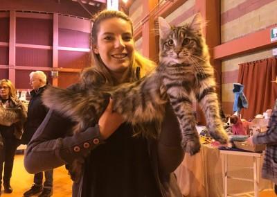 Cat Show Chivasso (IT) 21/22 Gennaio 2017 (WCF)