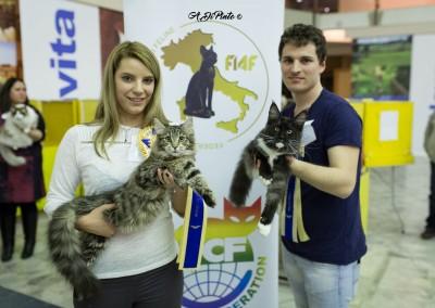 Cat Show Novara (IT) 14/15 Gennaio 2017 (WCF)