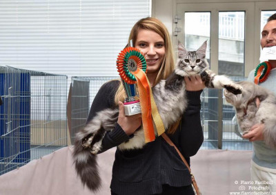 Cat Show San Marino (IT) 25/26 marzo 2017 (WCF)