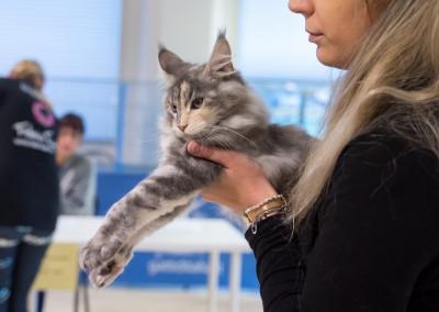 Cat Show San Marino (IT) 7/8 Dicembre 2019 (WCF)