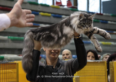 Cat Show Limbiate (IT) 17 Marzo 2019 (WCF)