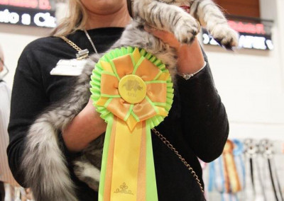 World Cat Show Chiasso (CH) 3/4 Marzo 2019 (WCF)