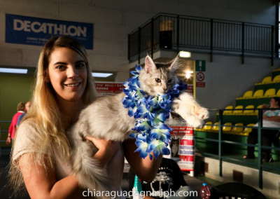 Cat Show Gattinara (IT) 13/14 Ottobre 2018 (WCF)