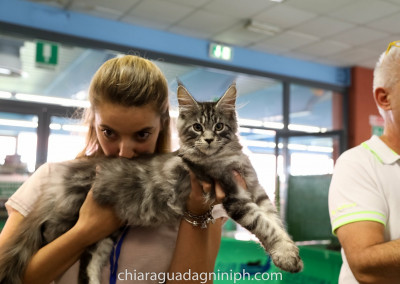 Cat Show Malpensa Fiere (IT) 20/21 Ottobre 2018