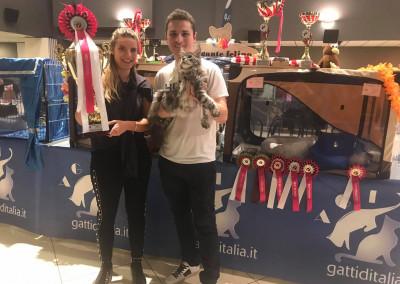 Cat Show San Marino (IT) 8/9 Dicembre 2018 (WCF)