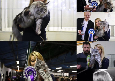 Cat Show Zanica (IT) 17/18 Febbraio 2018 (WCF)